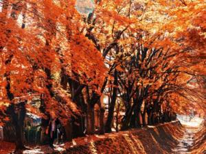 Mùa lá đỏ Du Lịch Lê Phong