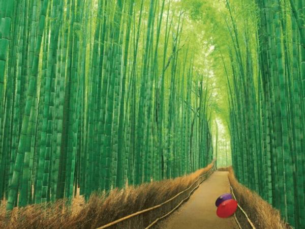 Tour Nhật Bản 4N4D – Kansai – Kyoto – Osaka 3