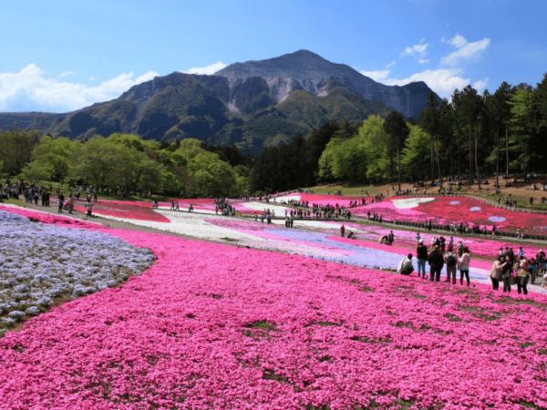Tour Nhật Bản 4N3D – Narita – Fuji – Saitama – Tokyo – Ibaraki 5